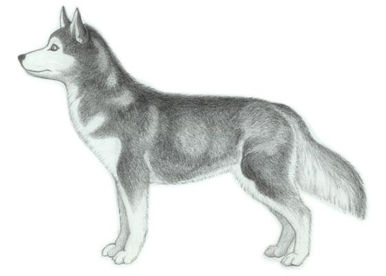 Como Desenhar Um Cachorro Passo A Passo Desenho De Cão