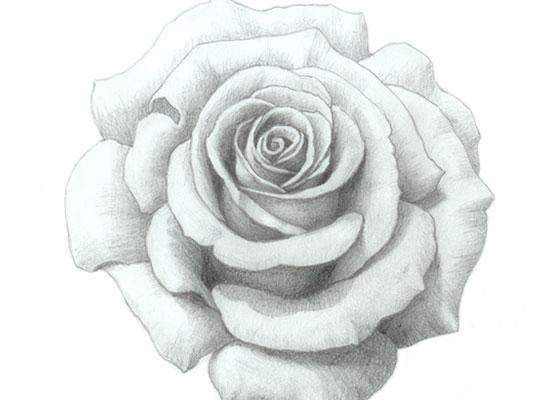 Como Desenhar Uma Rosa Fácil Desenho De Rosa Realista